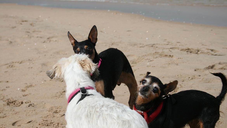Consejos para ir a la playa con tu perro