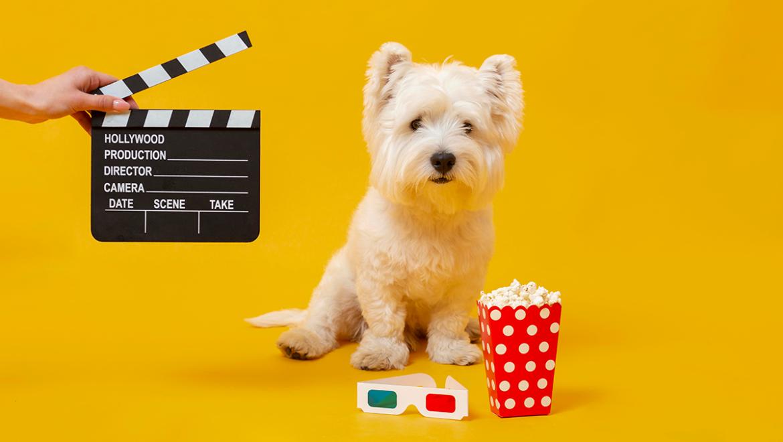10 Películas para amantes de los animales